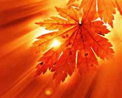 Image: Autumn leaf
